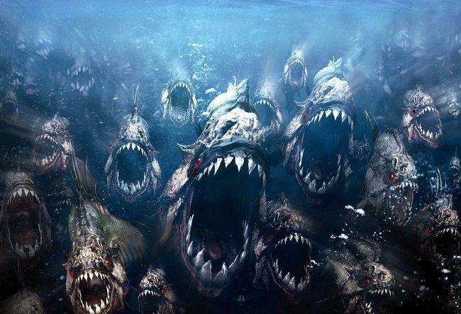 Piranha với hàm răng sắc nhọn đáng sợ