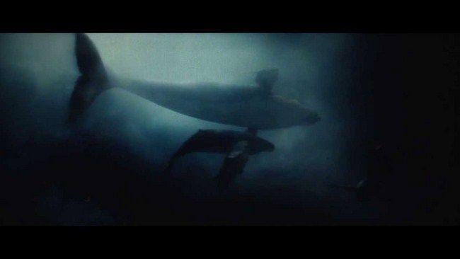 Aquaman đã ra lệnh cho đàn cá voi tới đưa Clark Kent vào bờ
